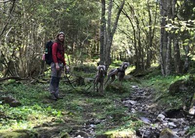 escursione-cane-dolomiti-bosco-trentino-vacanza-baita