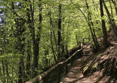 escursione-panoramica-bambini-trentino
