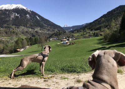 escursioni-con-cane-trentino-primiero