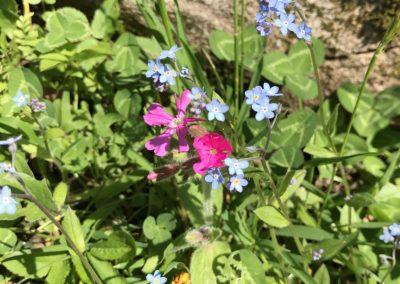 natura-trentino-montagna-fiori-primiero-vacanza-in-baita